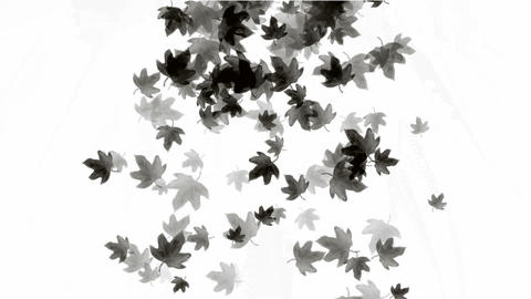 a group of black leafs... Stock Video Footage