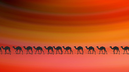 CAMELS ON DESERT Stock Video Footage