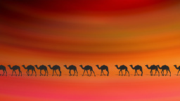CAMELS ON DESERT Animation