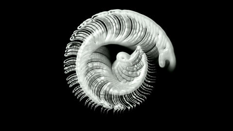 Profiled,Jellyfish,Conch,Rotating Sea biological.spiral,fractal,,Cambrian,Prehistoric,fossil,Design Animation