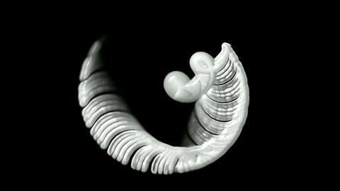 Profiled,Jellyfish,Conch,Rotating Sea…, Stock Animation
