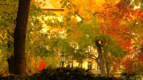Fall 11 Footage