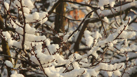 Trees in Snow 6 Stock Video Footage