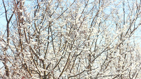 Trees in Snow 8 Stock Video Footage