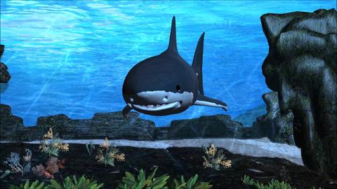 Blue Shark Attack Underwater HD Footage