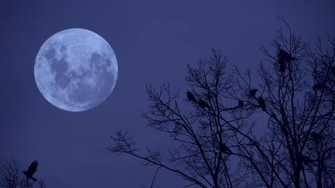 Ravens on the tree at midnight Footage