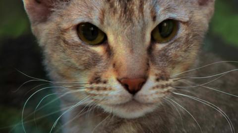 Morphing of feline Footage
