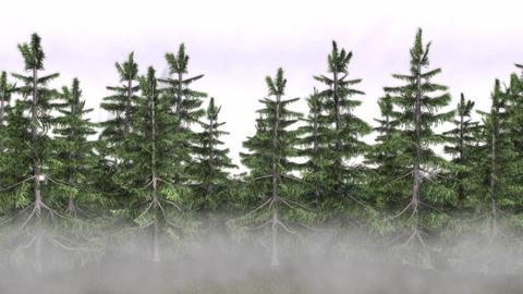 Alaska Rain Forest Moment HD Footage