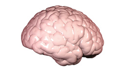 Throbbing brain Animation