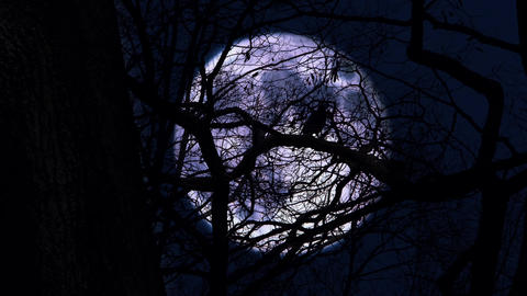 Crow on branch in the moonlit night Footage
