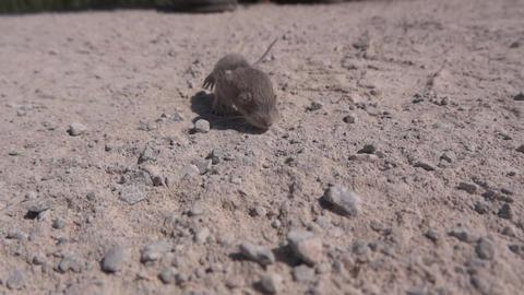 Newborn mouse 01 Footage