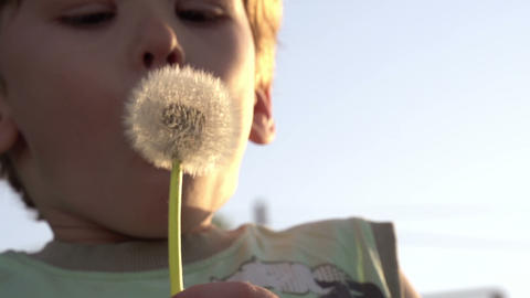 Boy And Dandelion stock footage