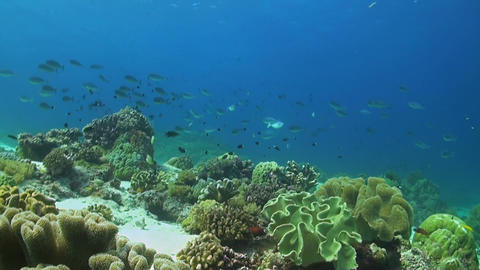 Soft corals on a coral reef Footage