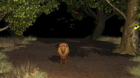 Great Lion Night Forest Light Eyes stock footage