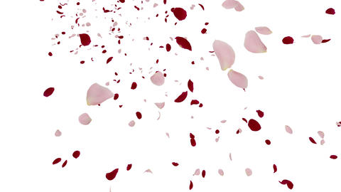 Rose petals mix tornado Jb 4 K Animation