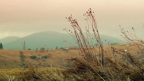 Dry Grass Sways in the Wind Footage