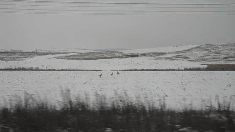 Regard on the train window 40 Footage