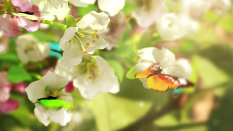 Blossoming Flowers And Butterflies stock footage