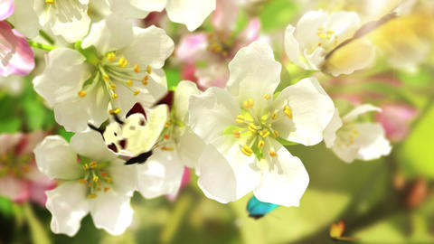 Blossoming flowers and butterflies Animation