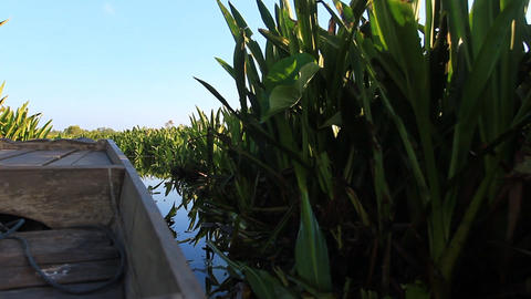 boat trip in the bird swamps Footage