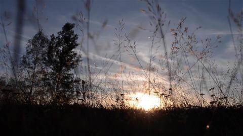 Sunset behind grass straw Footage