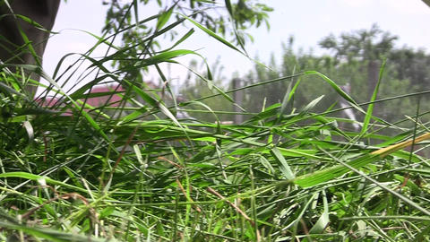 Gardener Mowing Grass 18 stock footage