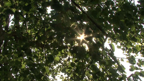 rays of the sun in the leaves Footage