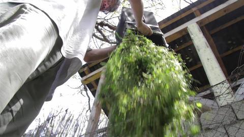 Gardening 03 Footage