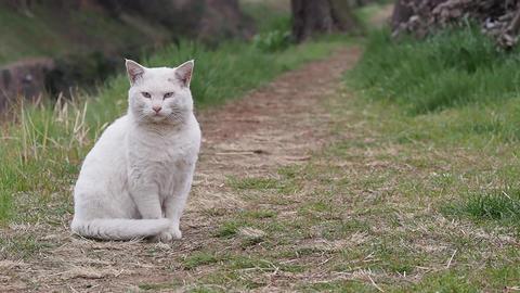 White Cat 0