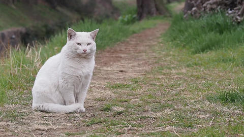 White Cat 4 Footage