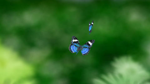 blue couple butterfly Stock Video Footage