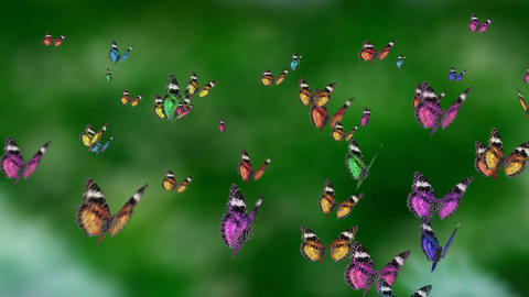 colorful mass butterfly Animation