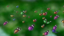 colorful mass butterfly Stock Video Footage