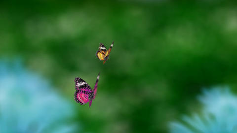 couple butterfly warm color Stock Video Footage