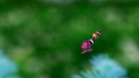 couple butterfly warm color Animation