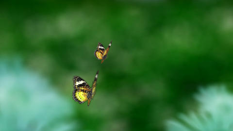 yellow couple butterfly Stock Video Footage