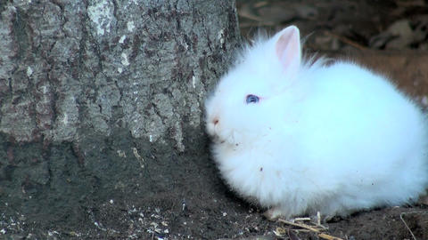 adorable white rabbit Stock Video Footage