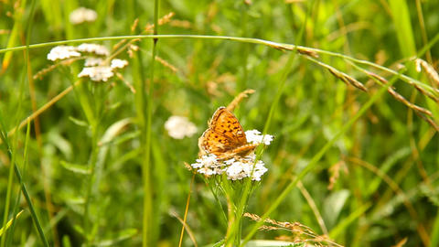 Butterfly CloseUp 01 Stock Video Footage