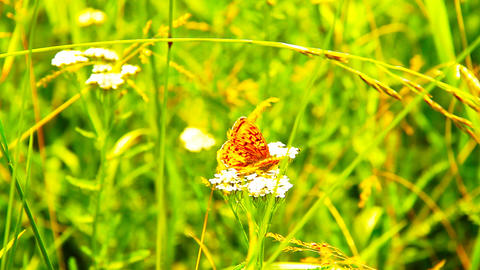 Butterfly CloseUp 05 ARTCOLORED Stock Video Footage