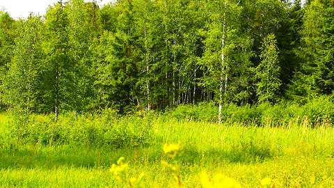 Forest And Field Beauty Scene 03 ARTCOLORED Stock Video Footage