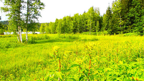 Forest And Field Beauty Scene 05 ARTCOLORED Stock Video Footage