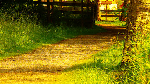 Path In Nature 10 ARTCOLORED Stock Video Footage