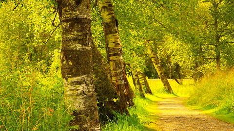 Path In Nature 08 ARTCOLORED Stock Video Footage