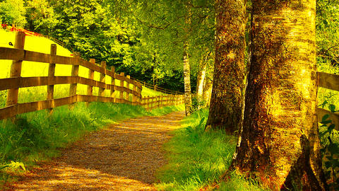 Path In Nature 12 ARTCOLORED Stock Video Footage