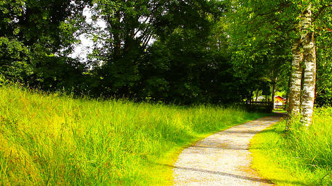 Path in Nature 14 ARTCOLORED Stock Video Footage