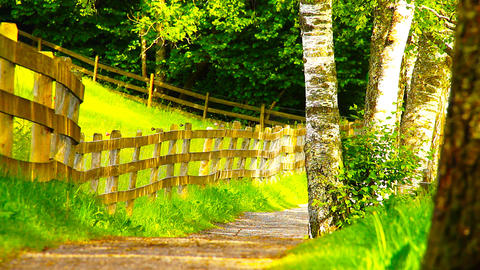 Path in Nature 16 ARTCOLORED Stock Video Footage