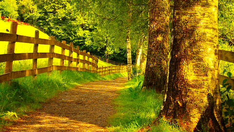 Paths In Nature 05 3 in 1 ARTCOLORED Stock Video Footage