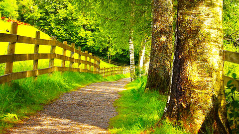 Runner On Nature Path 03 ARTCOLORED Stock Video Footage
