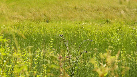 Summer Field Beauty Scene 01 Stock Video Footage