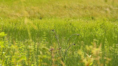Summer Field Beauty Scene 01 Footage